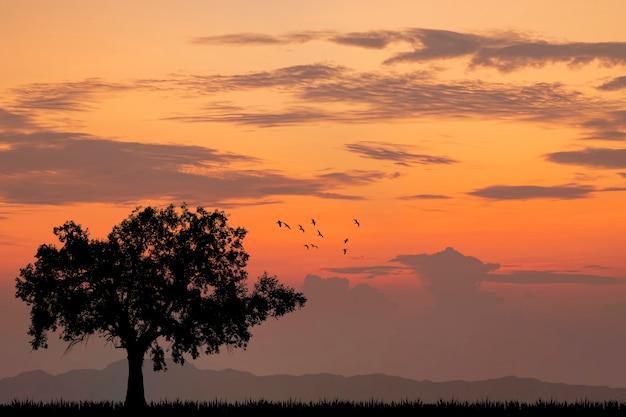 Árvore sozinha silhueta pôr do sol ou nascer do sol.