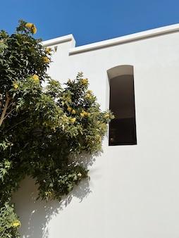 Árvore tropical com flores amarelas e folhas verdes exuberantes perto da casa branca, edifício do resort.
