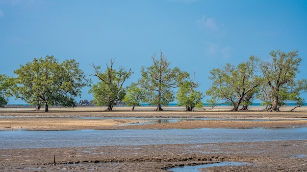 Árvore tropical na praia do mar