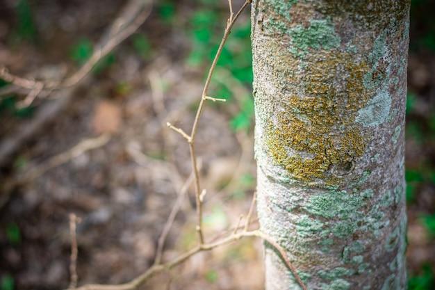 Árvore velha com líquene na selva.