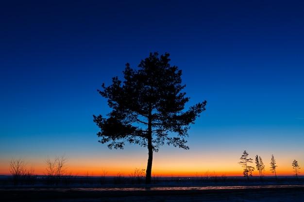 Árvore velha contra o céu com o pôr do sol.