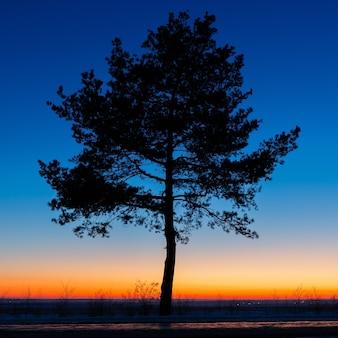 Árvore velha contra o céu com pôr do sol
