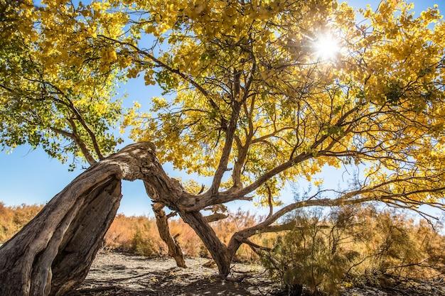 Árvore velha em uma paisagem ensolarada