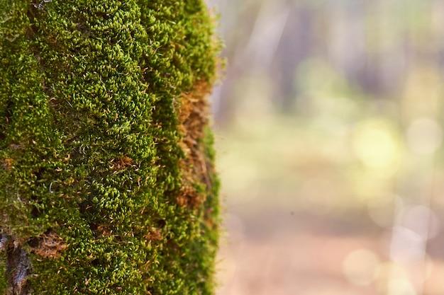 Árvore velha na floresta com musgo crescente no tronco.