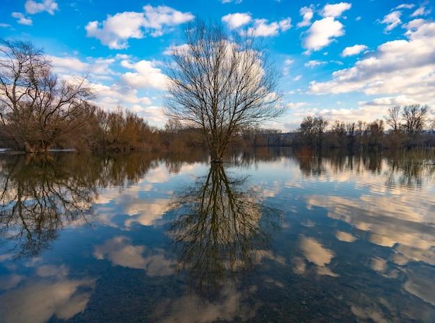 Árvore velha perto da água no inverno