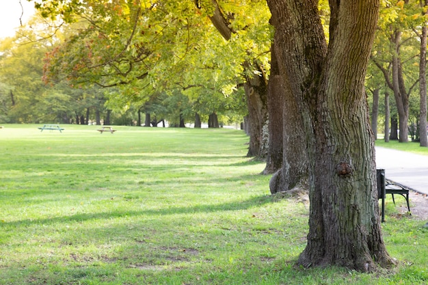Árvore verde alinhada no parque da cidade.
