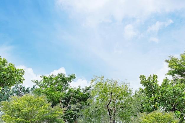 Árvore verde closeup no jardim com fundo lindo céu azul com espaço de cópia