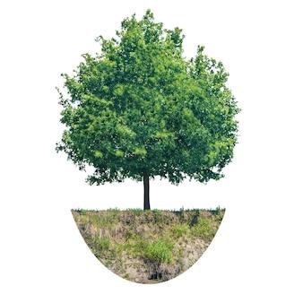 Árvore verde com um pedaço de solo isolado no fundo branco
