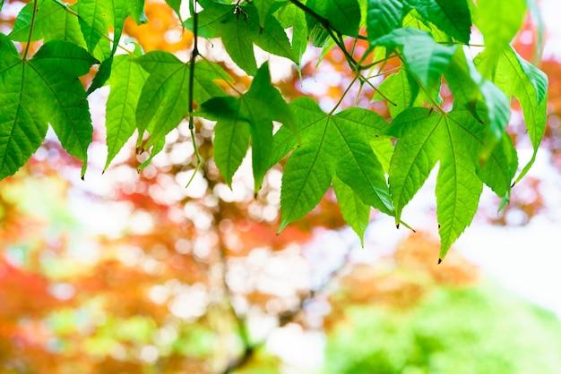 Árvore verde da folha com fundos da folha do vermelho e do amarelo e conceito da textura