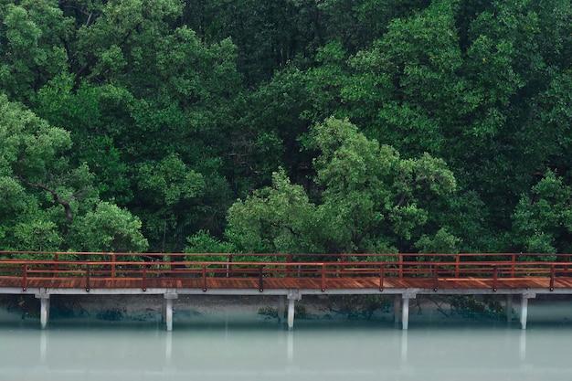 Árvore verde e madeira