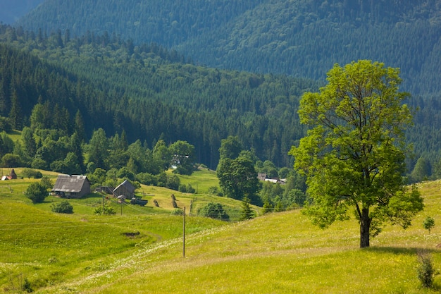 Árvore verde em pé nas montanhas azuis e casas de pastores no pasto verde