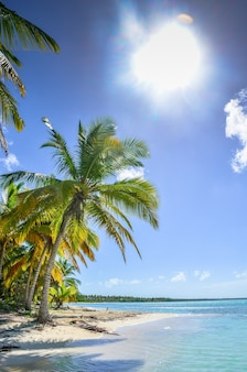 Árvore verde em uma praia de areia branca.