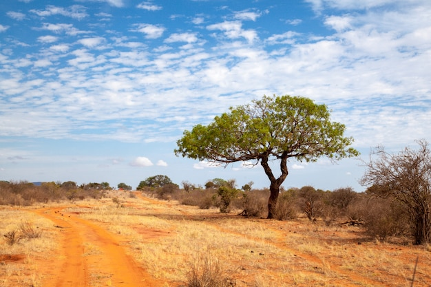 Árvore verde perto do caminho do solo vermelho, cenário do quênia