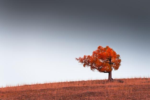 Árvore vermelha do outono na colina contra o céu. belo fundo de natureza de outono