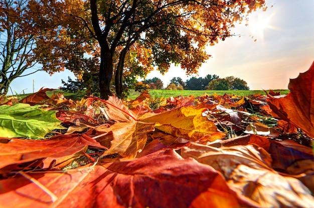 Árvore vista de folhas moídas