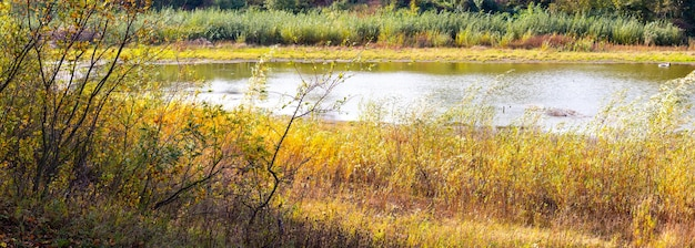 Arvoredos de árvores e arbustos de visitantes na margem do rio no clima ensolarado de outono
