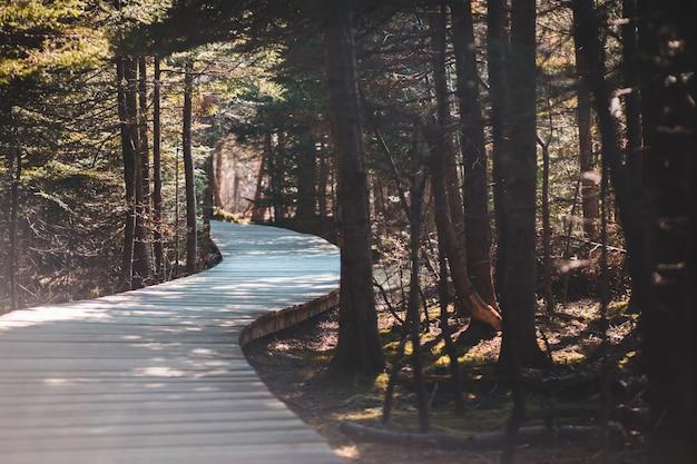 Árvores altas ao lado da estrada de concreto cinza