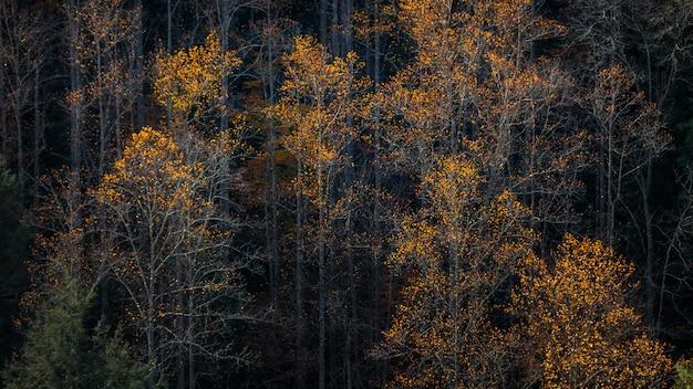 Árvores altas com folhas em cores de outono em uma floresta