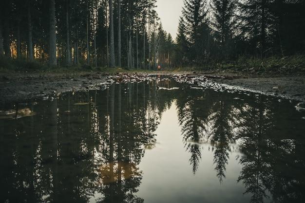 Árvores altas formam a floresta refletida na água de um pequeno lago