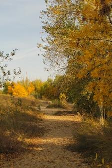 Árvores amarelas e verdes no parque quieto. conceito de outono.