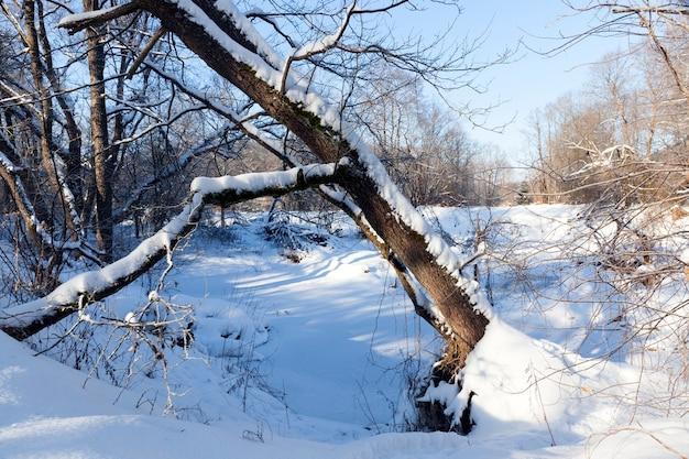 Árvores, arbustos e outras plantas cobertas de neve e geada no inverno