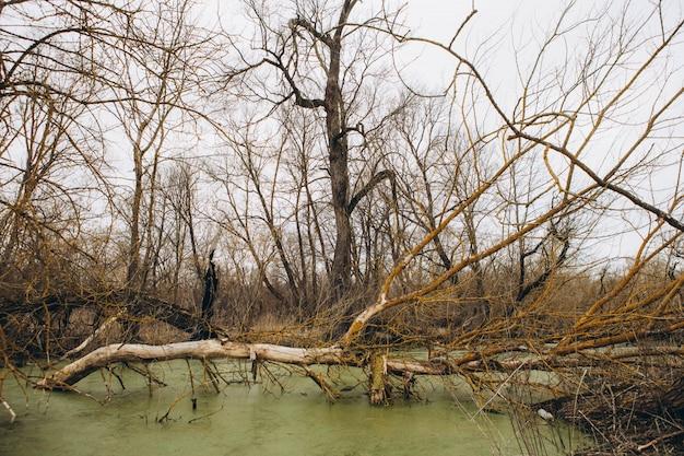 Árvores caídas no rio da floresta