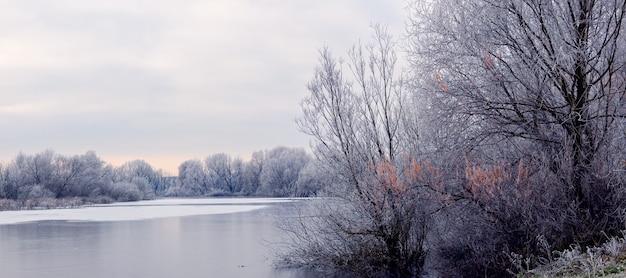 Árvores cobertas de geada no inverno na margem do rio pela manhã