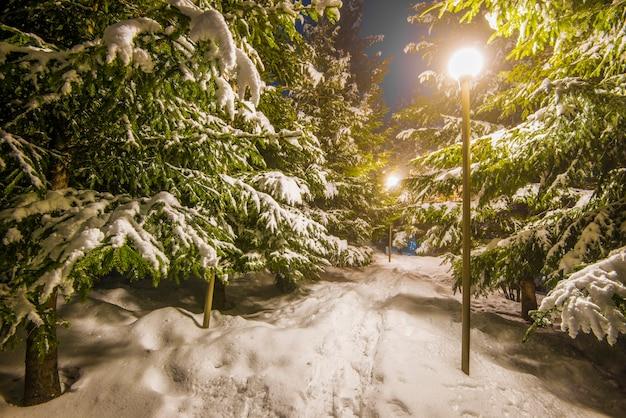 Árvores cobertas de neve, céu escuro e lanterna brilhando através da neve