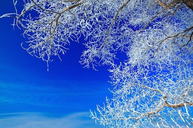 Árvores cobertas de neve contra o céu
