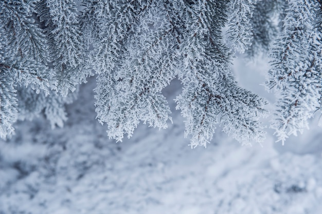 Árvores cobertas de neve em winter park