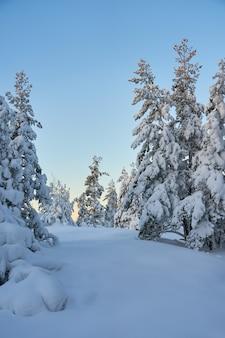 Árvores cobertas de neve na floresta de inverno ao pôr do sol. copie o espaço.