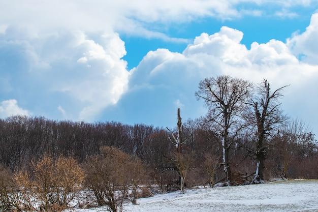 Árvores cobertas de neve na floresta de inverno em clima ensolarado