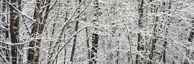 Árvores cobertas de neve na floresta de inverno nevada