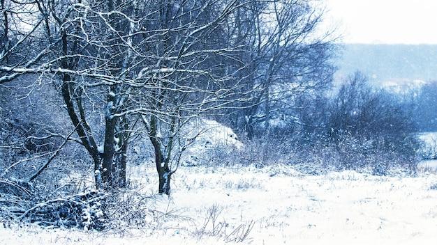 Árvores cobertas de neve na margem do rio durante uma nevasca