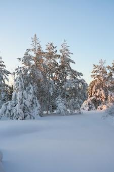 Árvores cobertas de neve no inverno árvores cobertas de neve na floresta de inverno ao pôr do sol.