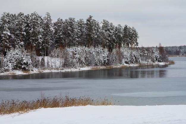 Árvores cobertos de neve brancas na floresta do inverno na beira do lago.
