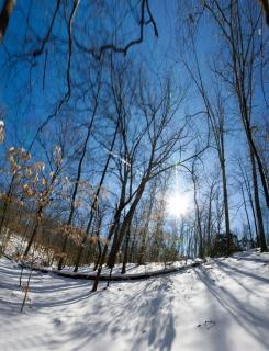 Árvores cobertos de neve caminho