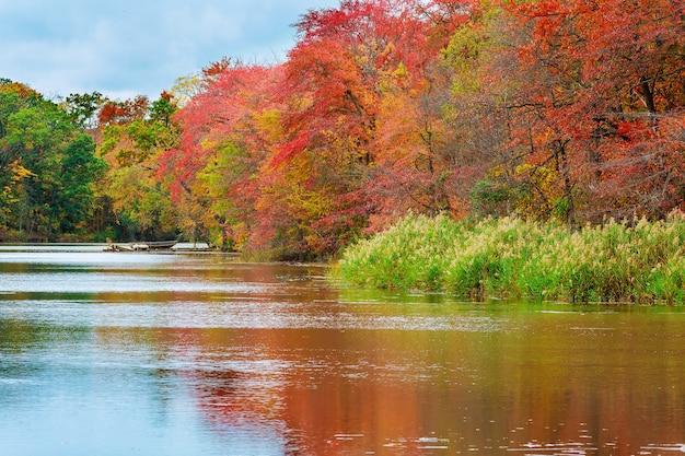 Árvores coloridas de outono no lago