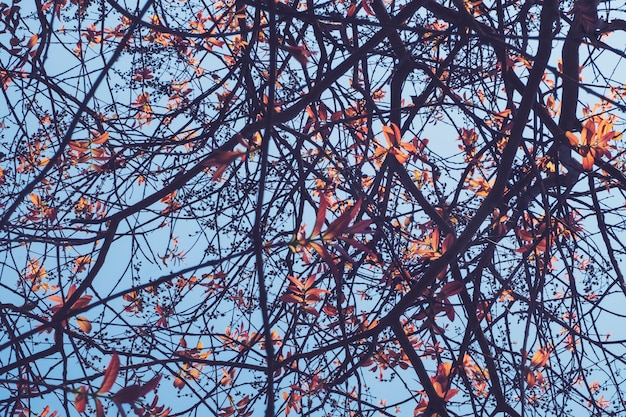 Árvores coloridas na temporada de primavera