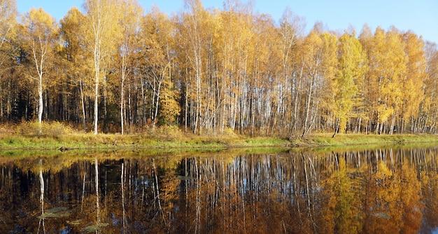 Árvores com folhagem amarela no lago. queda de ouro.