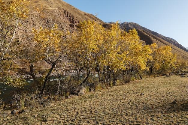 Árvores com folhas amarelas nas margens de um rio.