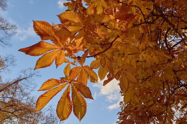 Árvores com folhas amarelas no jardim do parterre no outono
