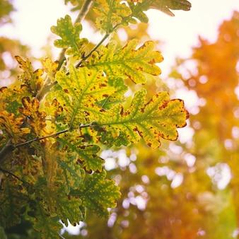 Árvores com folhas coloridas na natureza na temporada de outono