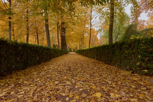 Árvores com folhas marrons no jardim do parterre no outono