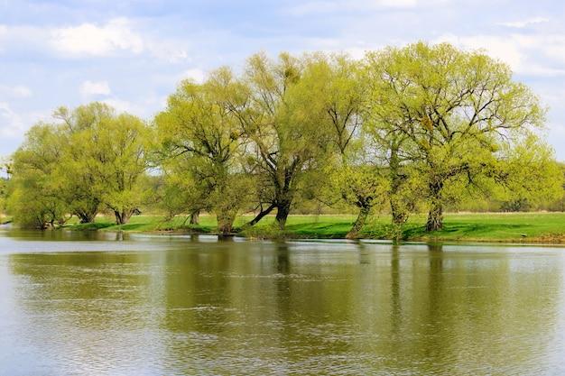 Árvores com folhas novas na margem do rio na primavera