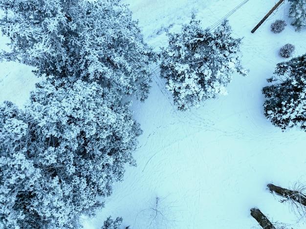 Árvores com neve no inverno frio, vista superior b