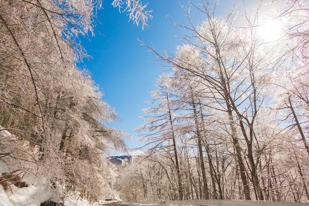 Árvores congeladas no inverno com céu azul