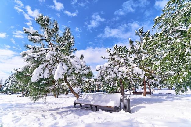 Árvores coníferas e banco de madeira coberto de neve no parque