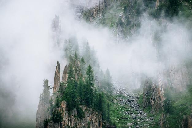 Árvores coníferas em pedras afiadas da montanha rochosa em denso nevoeiro. baixa nuvem perto de pedra alta com floresta. paisagem verde nevoenta vívida com rochas e árvores nas nuvens. encostas íngremes com riachos de pedras.