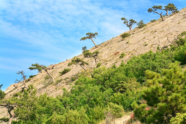 Árvores coníferas em rochas inclinam-se sobre fundo de céu azul (reserva